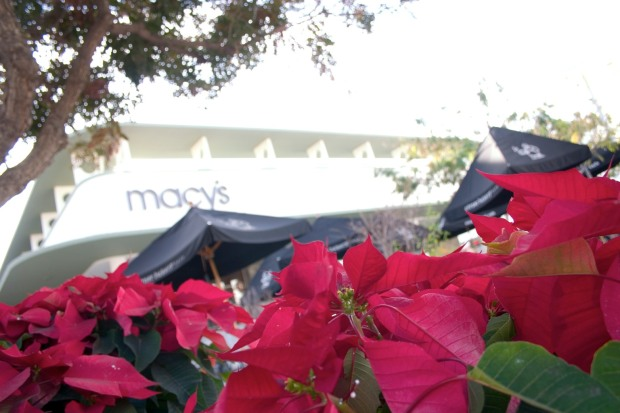 Poinsettias decorate South Lake Ave